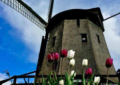 Molinos de Amsterdam tour en español